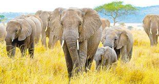 elephants-garden1