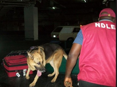 NIGER:    NDLEA NABS 'SOLDIER' WITH 218KG OF HEMP